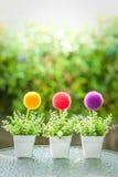 Decorative Plastic flower pot Royalty Free Stock Photo