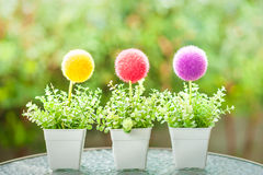 Decorative Plastic flower pot Stock Photography