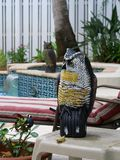 Pool and Garden Pest Protection. A decorative  plastic owl used for garden and pool pest protection against rodents and birds and other animals Stock Photos