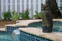 Pool and Garden Pest Protection. A decorative  plastic owl used for garden and pool pest protection against rodents and birds and other animals Royalty Free Stock Images