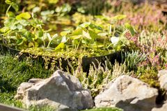 Decorative pond in the garden, close up stock photo