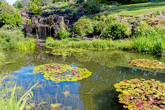 Decorative pond with waterfall and lilly at city park Stock Images