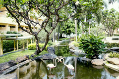 Decorative pool in a beautiful tropical garden Stock Images
