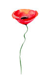 Decorative Poppy flower. Watercolor illustration Royalty Free Stock Photography
