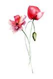 Decorative Poppy flowers Royalty Free Stock Photography