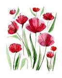 Decorative poppy flowers. Watercolor illustration. Stock Photography