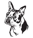 Decorative portrait of Dog Boston terrier vector illustration. Decorative portrait of dog Boston terrier, vector isolated illustration in black color on white vector illustration