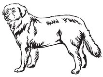 Decorative standing portrait of Maremma Sheepdog vector illustra. Decorative portrait of standing in profile Maremma Sheepdog, vector isolated illustration in Royalty Free Stock Images