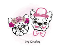 Decorative portrait of two french bulldogs. Bride and groom. Stock Photo