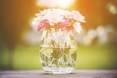 Decorative posy of fresh pink summer flowers. In a glass vase on an outdoor wooden table viewed close up on the side with golden glow from the sun Stock Photo
