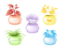 Decorative pot plants Stock Photos
