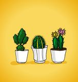 Decorative potted cactus Stock Image