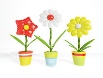 Decorative potted flowers on a white background Royalty Free Stock Images