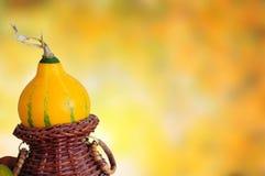Decorative pumkin. On autumn background stock image