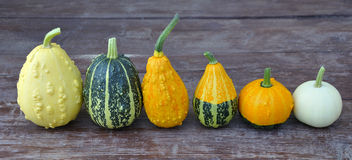 Decorative pumpkin Stock Photography