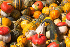 Decorative pumpkin Royalty Free Stock Image