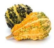 Decorative pumpkin Stock Image
