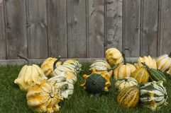Decorative Pumpkin Stock Image