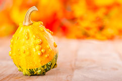 Decorative pumpkin Stock Photos
