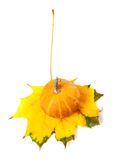 Decorative pumpkin on autumn maple-leaf Stock Images