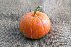Decorative pumpkin on burlap Royalty Free Stock Photography