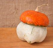 Decorative pumpkin (Cucurbita pepo) Stock Image
