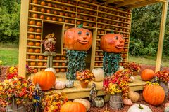 Decorative pumpkin display in autumn stock photography