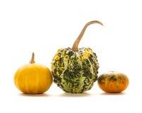 Decorative pumpkin isolated Stock Photography