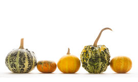 Decorative pumpkin isolated Royalty Free Stock Image