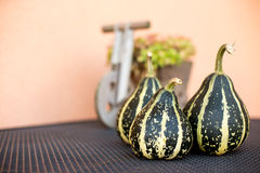 Decorative pumpkin Royalty Free Stock Image