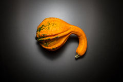 Decorative pumpkin. One pumpkin decorative view from the top Stock Images