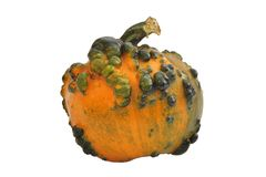 Decorative pumpkin with pimples royalty free stock image