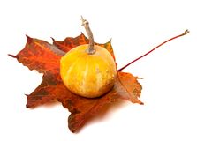 Decorative pumpkin on red autumn maple-leaf Royalty Free Stock Photography