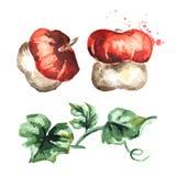 Decorative pumpkin set. Watercolor illustration. Decorative pumpkin set. Watercolor hand-drawn illustration vector illustration