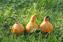 Decorative pumpkin Stock Photos