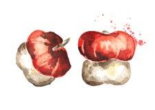 Decorative pumpkin. Watercolor illustration. Decorative pumpkin. Watercolor hand-drawn illustration stock illustration