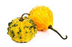 Decorative pumpkins Royalty Free Stock Images