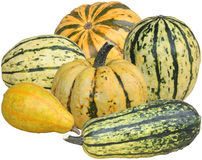 Decorative pumpkins. Various kinds of decorative pumpkins on white background royalty free stock photo