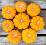 Decorative pumpkins. Closeup image of miniature decorative pumpkins on a rustic wood board Stock Photos