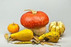 Decorative pumpkins Royalty Free Stock Photo