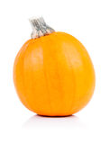 Decorative pumpkins Stock Images