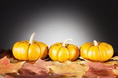 Decorative pumpkins. Three decorative miniature pumpkins on dry fall leaves Royalty Free Stock Photos