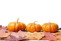 Decorative pumpkins. Three decorative miniature pumpkins on dry fall leaves Stock Photo