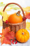 Decorative pumpkins and autumn leaves in basket Stock Photos