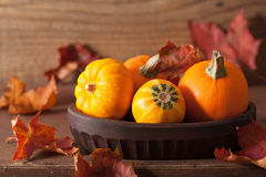 Decorative pumpkins and autumn leaves for halloween Stock Photos