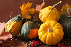 Decorative pumpkins and autumn leaves for halloween Stock Image