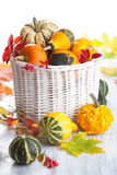 Decorative pumpkins and autumn leaves isolated Stock Photo