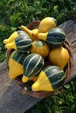 Decorative pumpkins at basket Stock Images