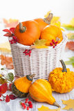 Decorative pumpkins in basket Royalty Free Stock Photo