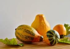 Decorative pumpkins Stock Photos